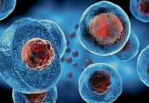 Infezioni Virali scorciatoia sistema immunitario